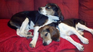 my hounds